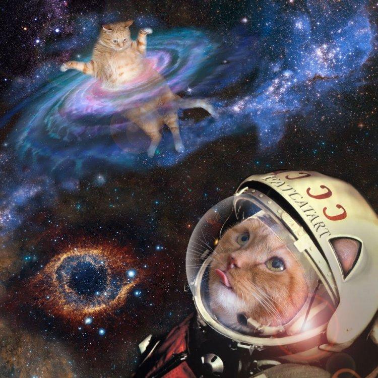 space-cat-w.thumb.jpg.eef4fa7899073a8bec9c1744d1280d7f.jpg